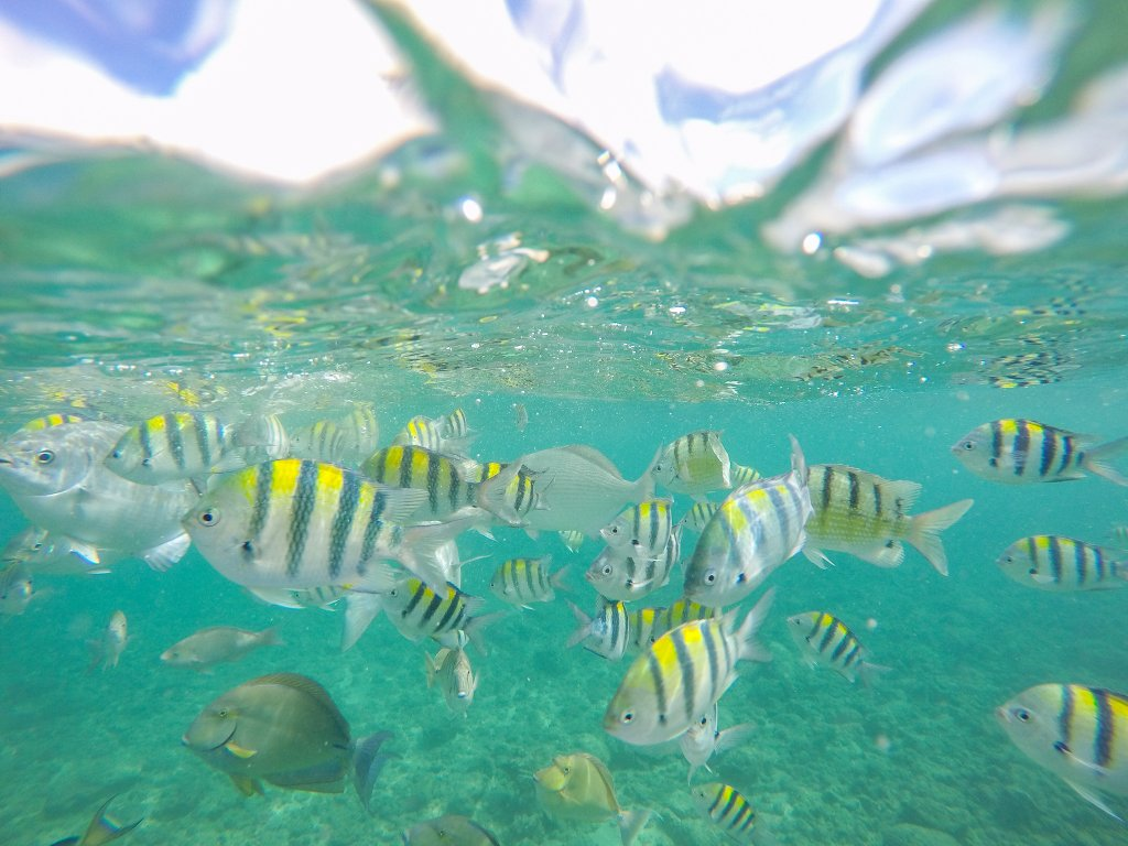 snorkeling babymoon in Hawaii