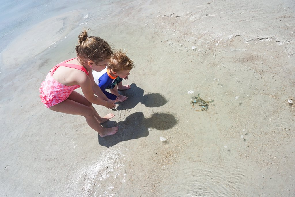 kids catching crabs on the beaches of Amelia Island