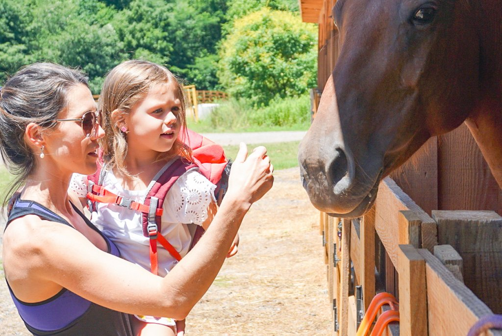 kid petting the horse at the Barnsley Resort barnyard