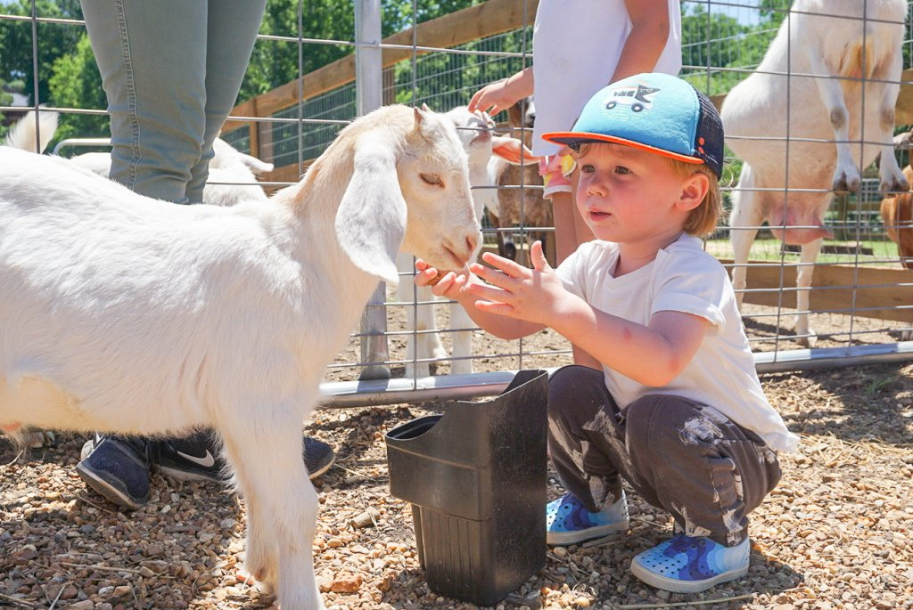 kid petting the baby goat at the Barnsley Resort barnyard