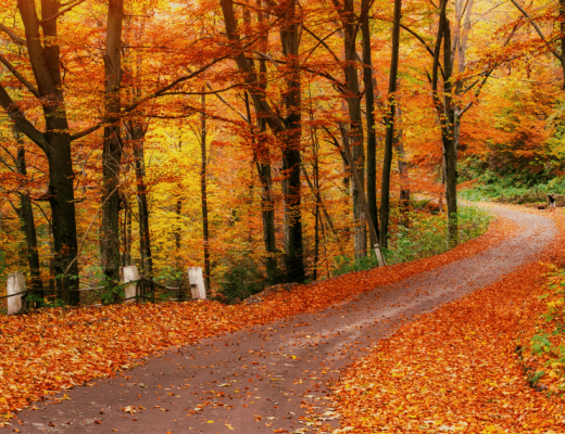 a road surrounded by trees with changing leaves- fall trip ideas in the south
