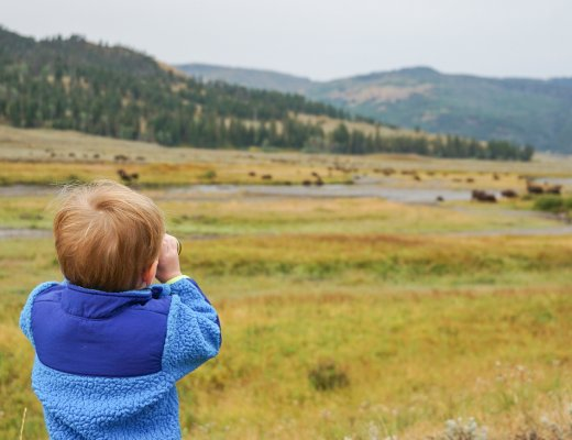 looking for bison in Lamar Valley- one of our favorite things to do in Yellowstone with kids