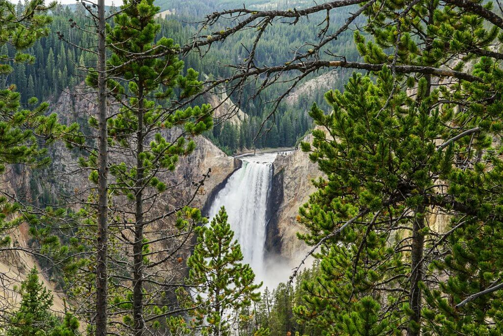 view of the Lower Falls in the canyon area of Yellowstone